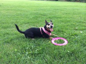 Holly at the park