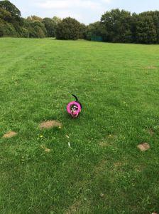 Holly frisbee